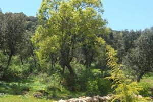 Zona de bosque - Zafarrancho
