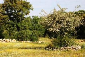 Campo en flor - Zafarrancho