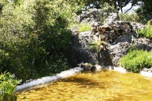 Estanque - Zafarrancho