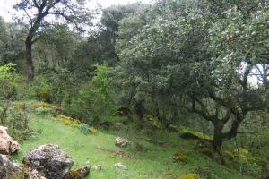 Zona de monte - Zafarrancho